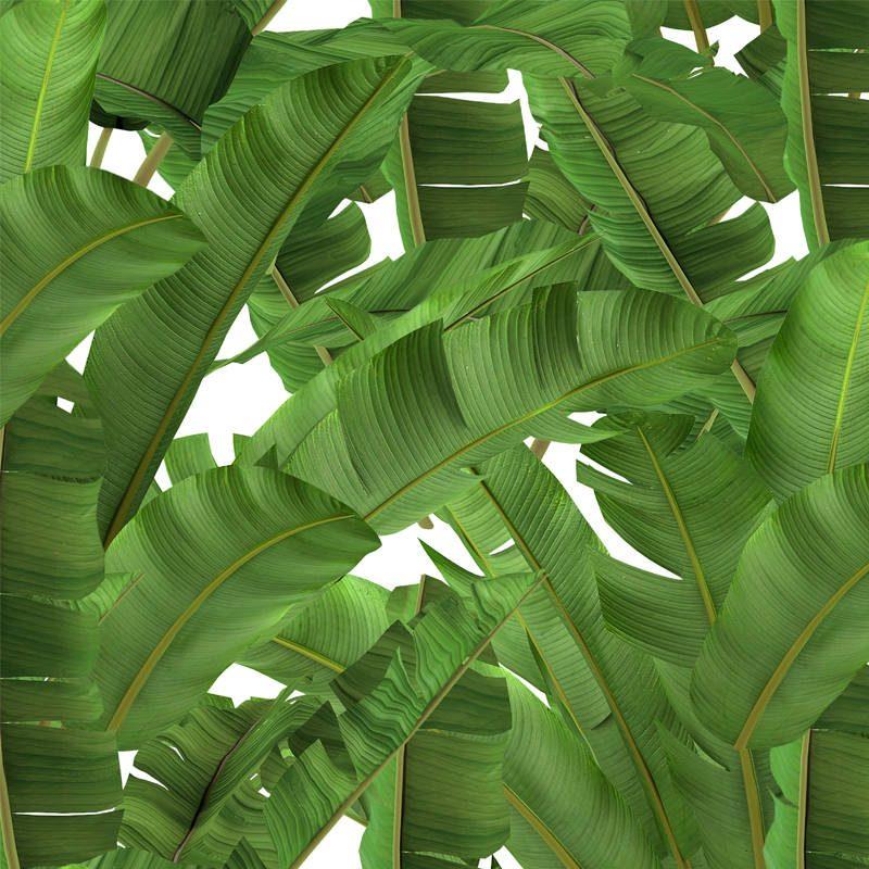 טפט Jungle Leaf