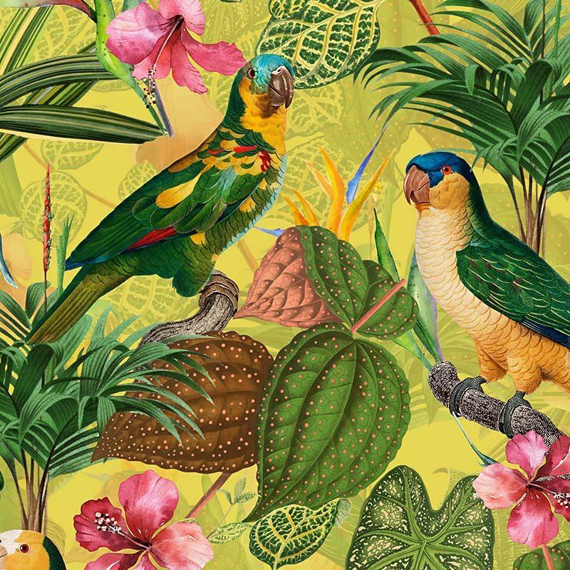 טפט Parrots With Orchids