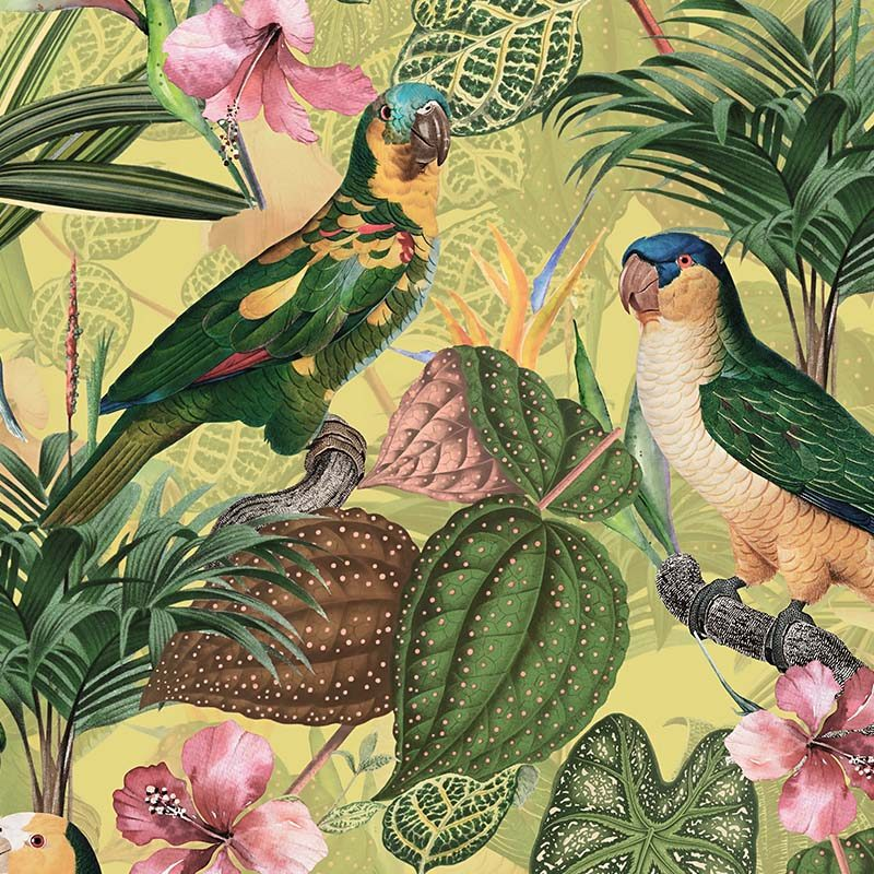 טפט Parrots With Orchids Pale