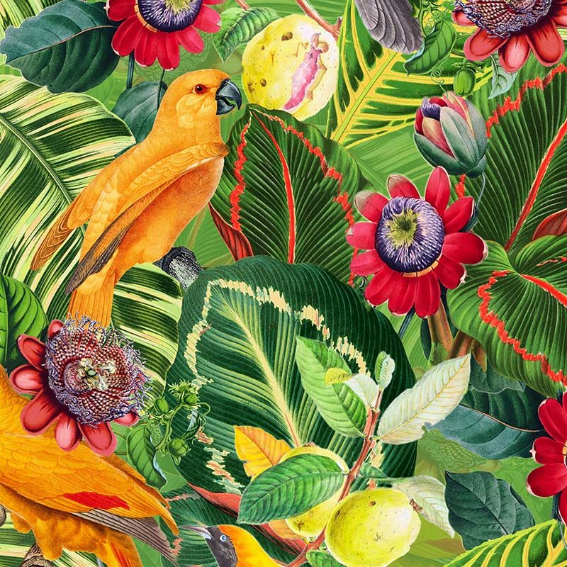 טפט Yellow Parrots In Jungle With Passiflora